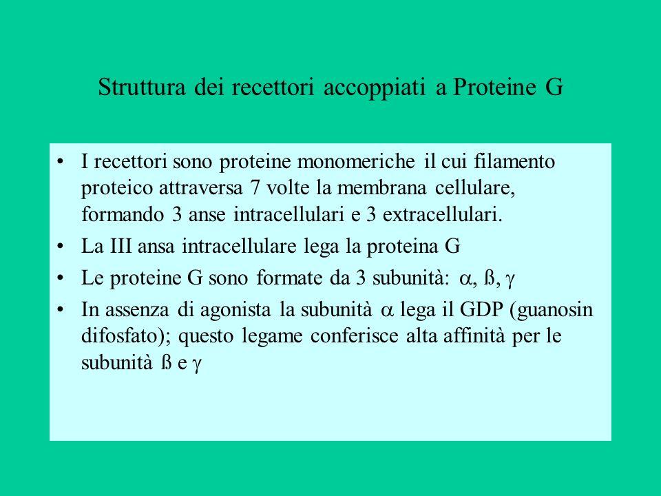 Struttura dei recettori accoppiati a Proteine G I recettori sono proteine monomeriche il cui filamento proteico attraversa 7 volte la membrana cellula