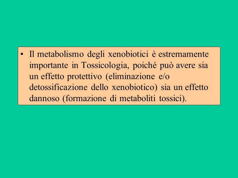 Il metabolismo degli xenobiotici è estremamente importante in Tossicologia, poiché può avere sia un effetto protettivo (eliminazione e/o detossificazi