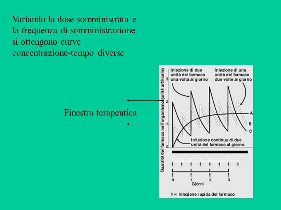 Variando la dose somministrata e la frequenza di somministrazione si ottengono curve concentrazione-tempo diverse Finestra terapeutica
