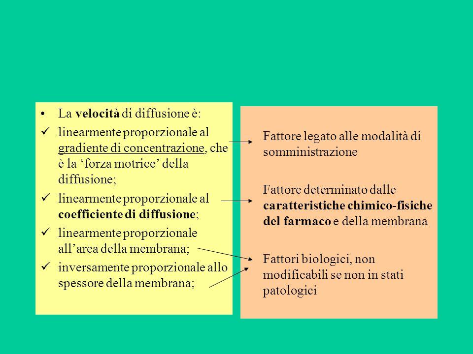 La velocità di diffusione è: linearmente proporzionale al gradiente di concentrazione, che è la forza motrice della diffusione; linearmente proporzion