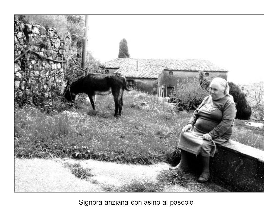 Signora anziana con asino al pascolo