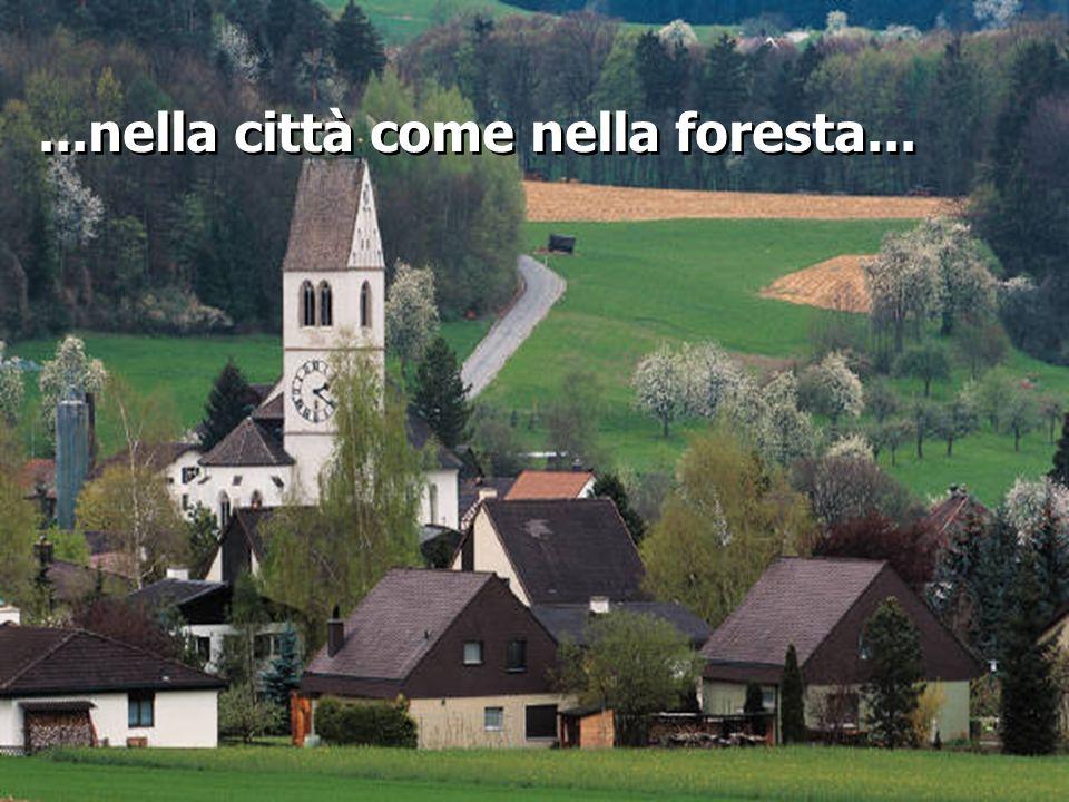 ...nella città come nella foresta...