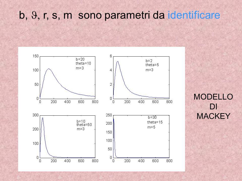 b, r, s, m sono parametri da identificare MODELLO DI MACKEY
