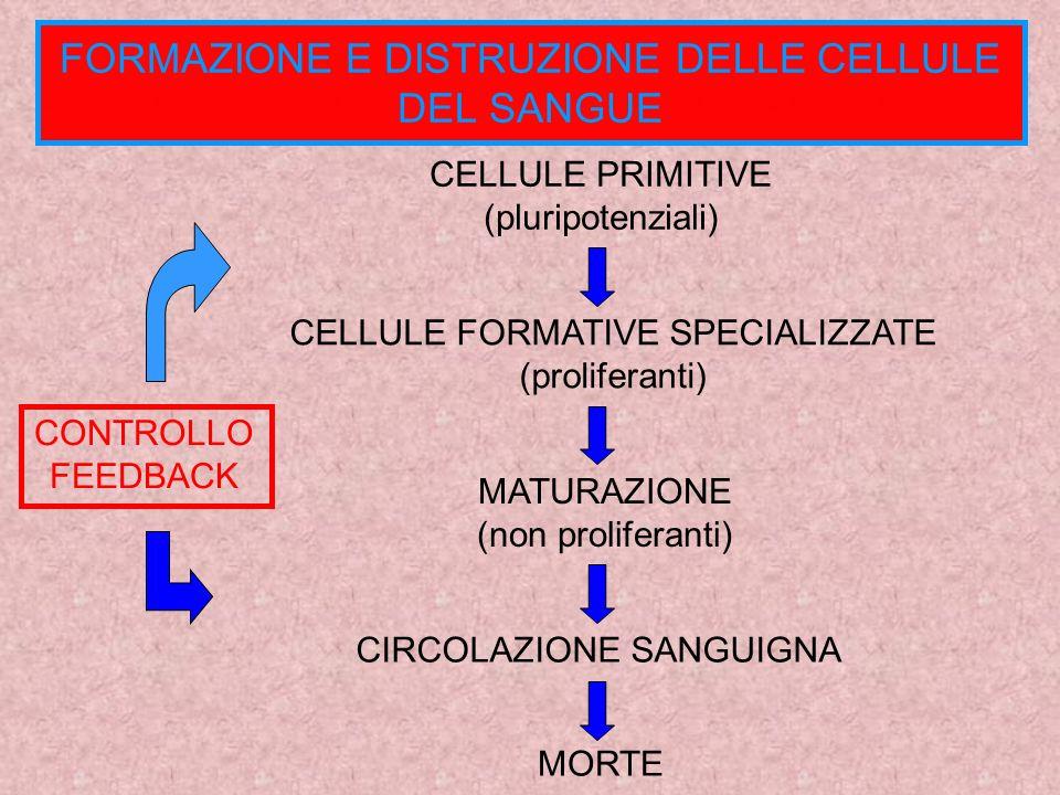 unità di tempo n° di cellule al tempo ti MODELLO MATEMATICO La popolazione di cellule del sangue varia nel tempo n° di cellule distrutte n° di cellule prodotte nellintervallo di tempo [ti, ti+1]