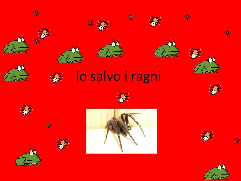 Io salvo i ragni