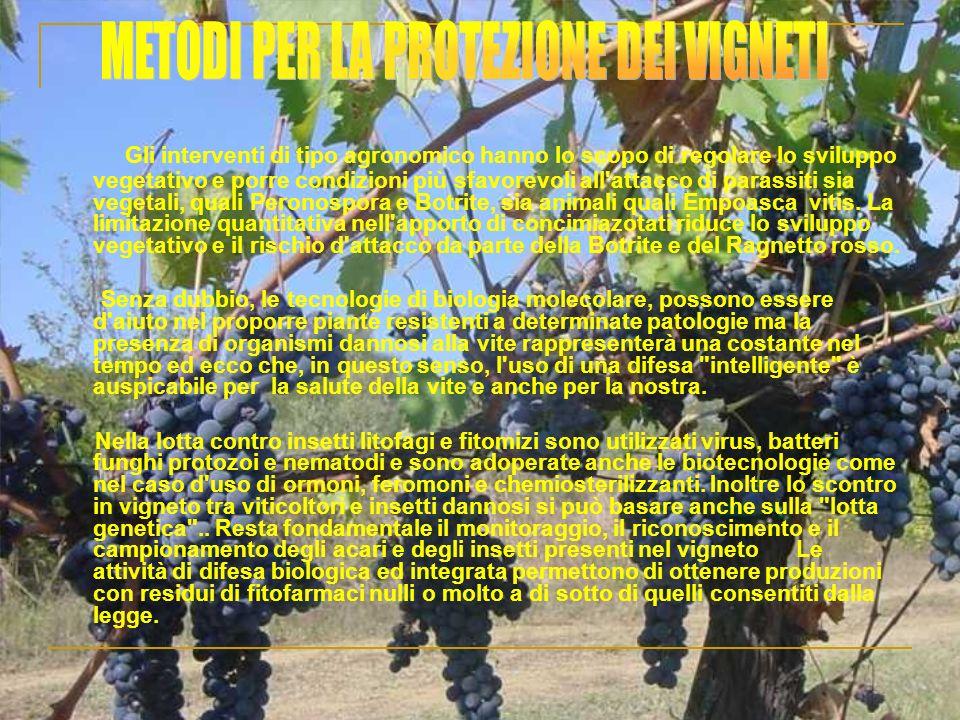 Gli interventi di tipo agronomico hanno lo scopo di regolare lo sviluppo vegetativo e porre condizioni più sfavorevoli all'attacco di parassiti sia ve