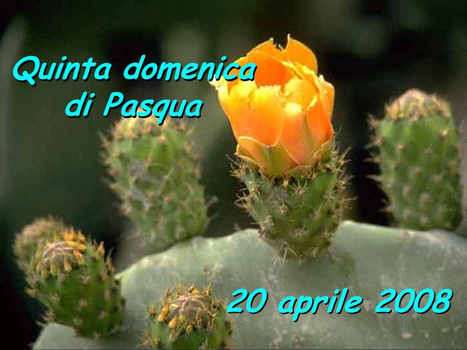 Quinta domenica di Pasqua Quinta domenica di Pasqua 20 aprile 2008
