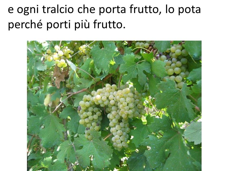 e ogni tralcio che porta frutto, lo pota perché porti più frutto.
