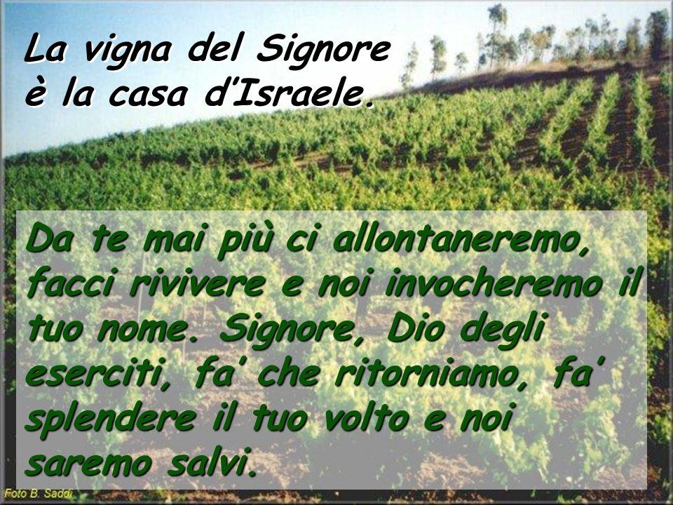 La vigna del Signore è la casa dIsraele. La vigna del Signore è la casa dIsraele. Da te mai più ci allontaneremo, facci rivivere e noi invocheremo il