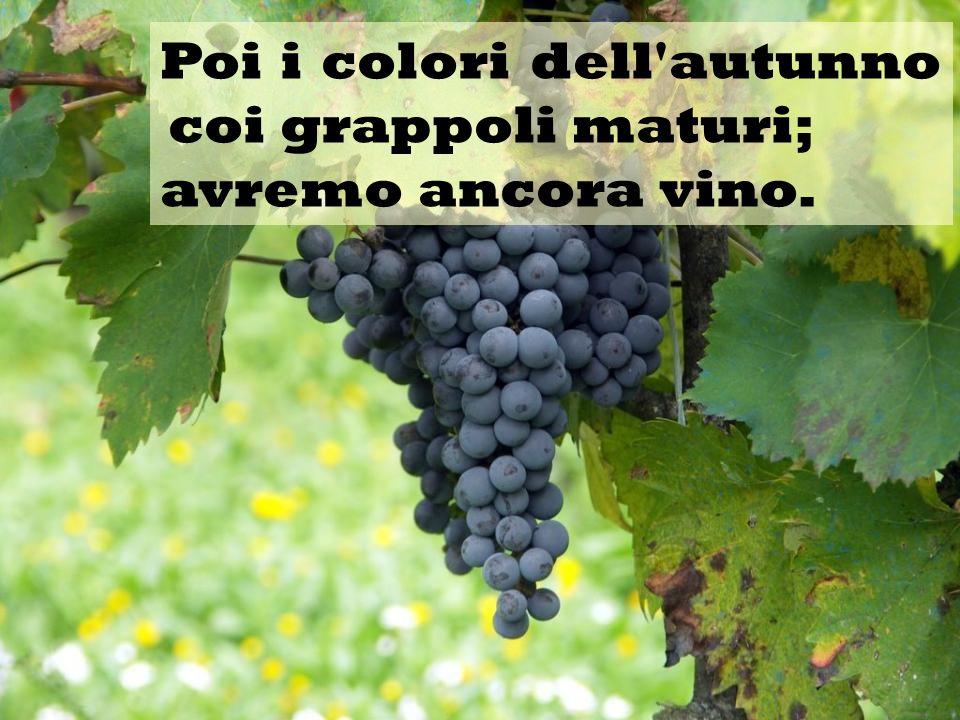 Poi i colori dell'autunno coi grappoli maturi; avremo ancora vino.