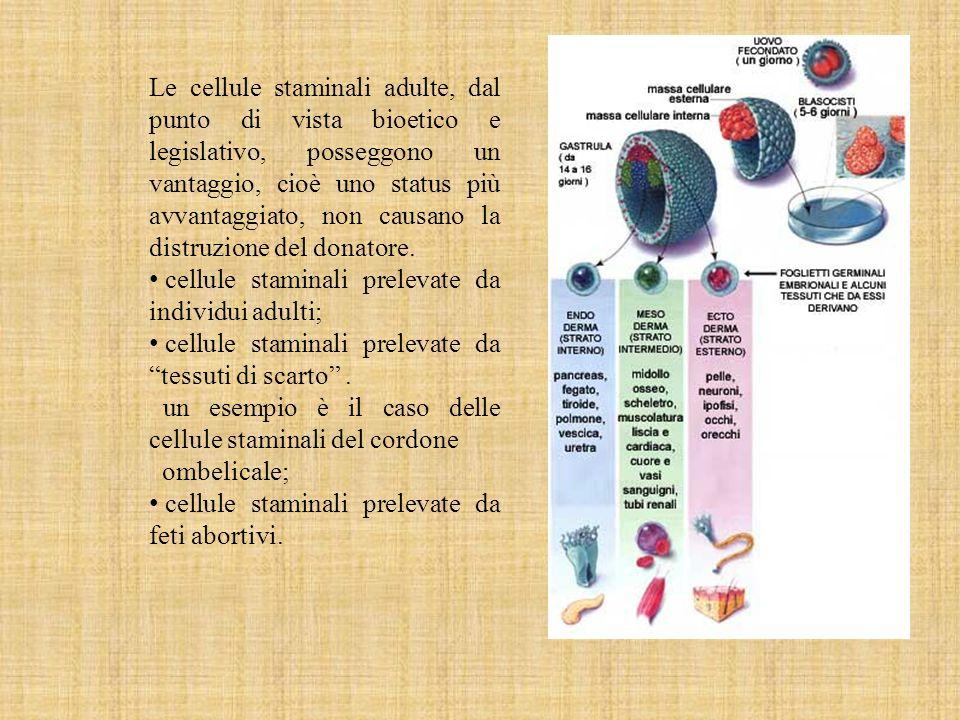 Le cellule staminali adulte, dal punto di vista bioetico e legislativo, posseggono un vantaggio, cioè uno status più avvantaggiato, non causano la dis
