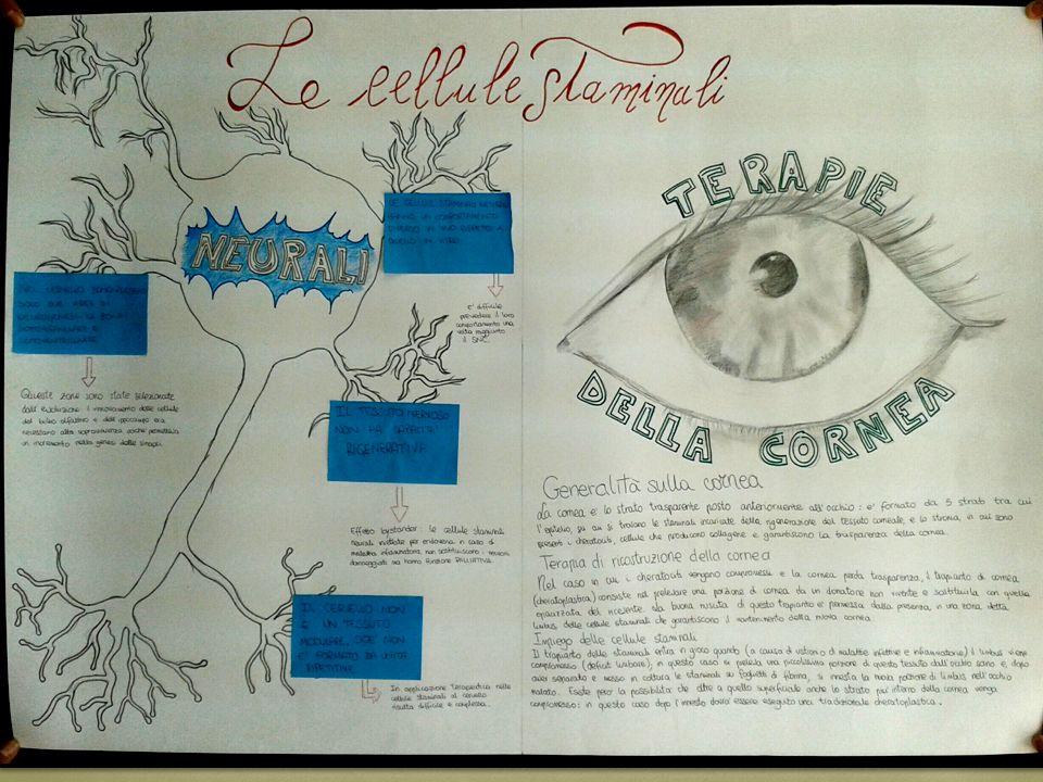 Il nostro gruppo ha scelto, tra i temi proposti relativamente alle cellule staminali, «Cellule staminali neurali» e «Terapie della cornea» perché erano quelli su cui avevamo più interesse a condurre delle indagini.