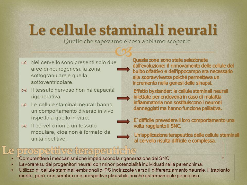 Nel cervello sono presenti solo due aree di neurogenesi: la zona sottogranulare e quella sottoventricolare. Il tessuto nervoso non ha capacità rigener