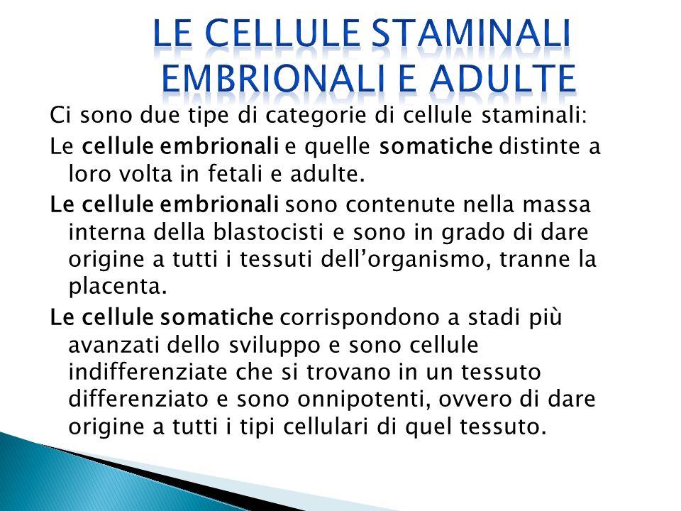Ci sono due tipe di categorie di cellule staminali: Le cellule embrionali e quelle somatiche distinte a loro volta in fetali e adulte. Le cellule embr