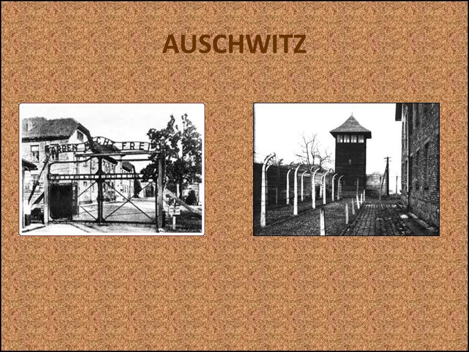 AUSCHWITZ Sempre allentrata si trovavano una betulla ed unaiuola ben curata, in netto contrasto con le cose terribili che accadevano in quel luogo. Vi