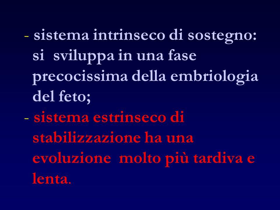 - sistema intrinseco di sostegno: si sviluppa in una fase precocissima della embriologia del feto; - sistema estrinseco di stabilizzazione ha una evoluzione molto più tardiva e lenta.