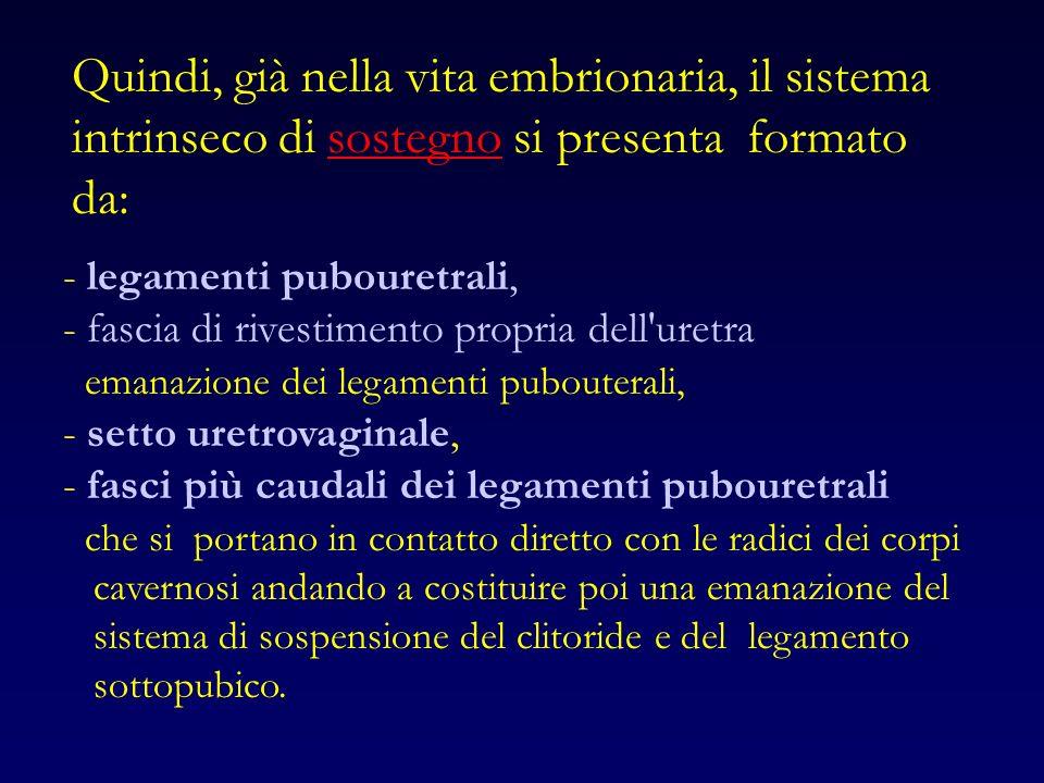 Quindi, già nella vita embrionaria, il sistema intrinseco di sostegno si presenta formato da: - legamenti pubouretrali, - fascia di rivestimento propria dell uretra emanazione dei legamenti pubouterali, - setto uretrovaginale, - fasci più caudali dei legamenti pubouretrali che si portano in contatto diretto con le radici dei corpi cavernosi andando a costituire poi una emanazione del sistema di sospensione del clitoride e del legamento sottopubico.