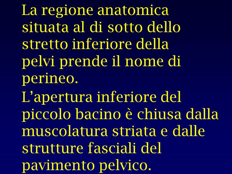 La regione anatomica situata al di sotto dello stretto inferiore della pelvi prende il nome di perineo.