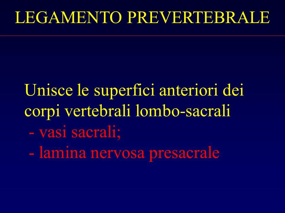 Unisce le superfici anteriori dei corpi vertebrali lombo-sacrali - vasi sacrali; - lamina nervosa presacrale LEGAMENTO PREVERTEBRALE