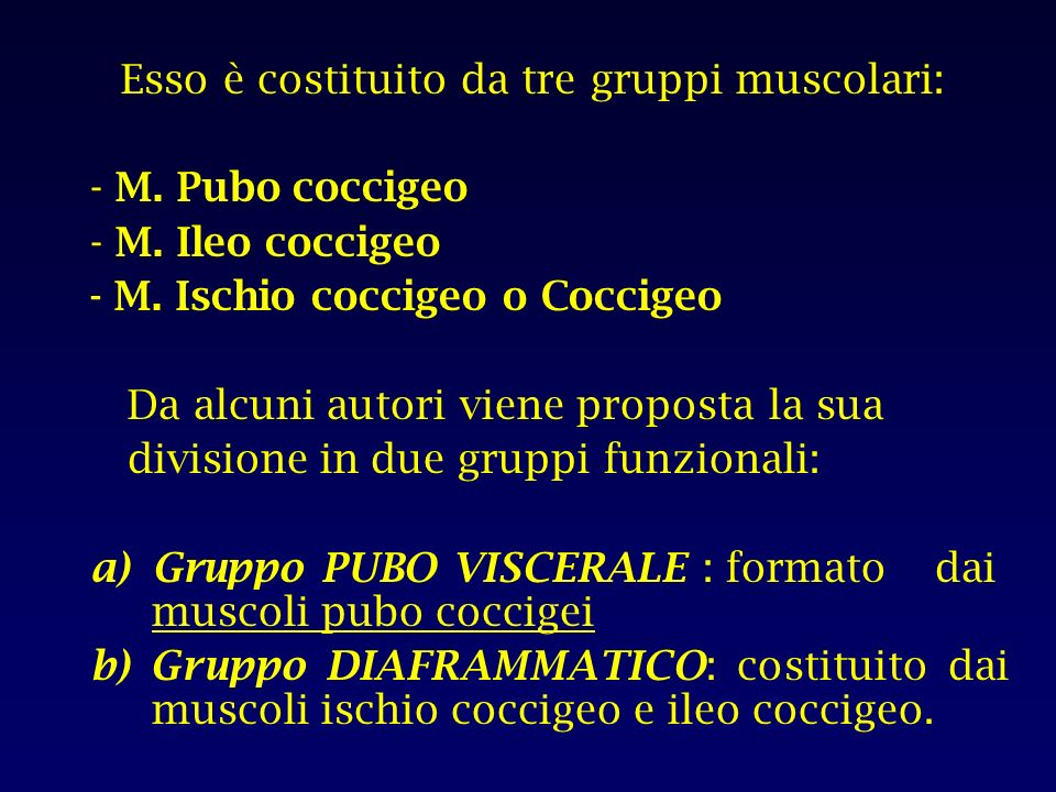 Esso è costituito da tre gruppi muscolari: - M.Pubo coccigeo - M.