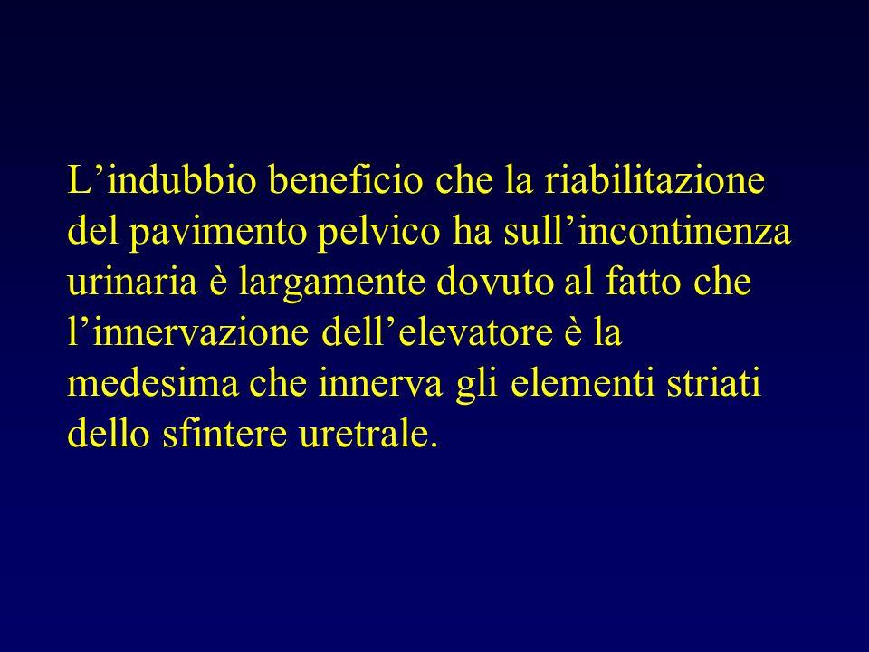 Lindubbio beneficio che la riabilitazione del pavimento pelvico ha sullincontinenza urinaria è largamente dovuto al fatto che linnervazione dellelevatore è la medesima che innerva gli elementi striati dello sfintere uretrale.