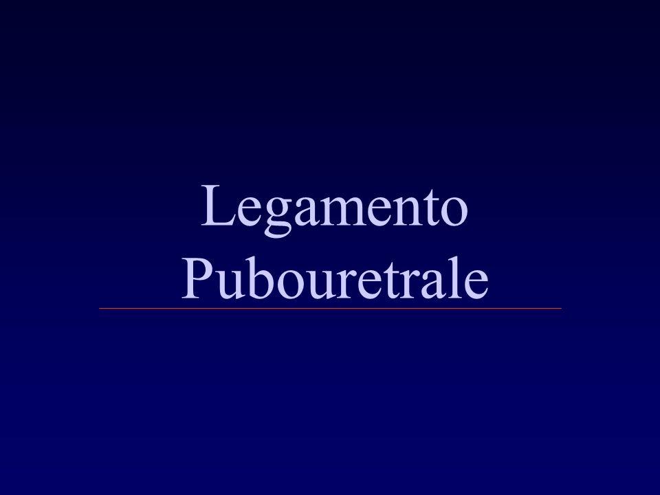Legamento Pubouretrale