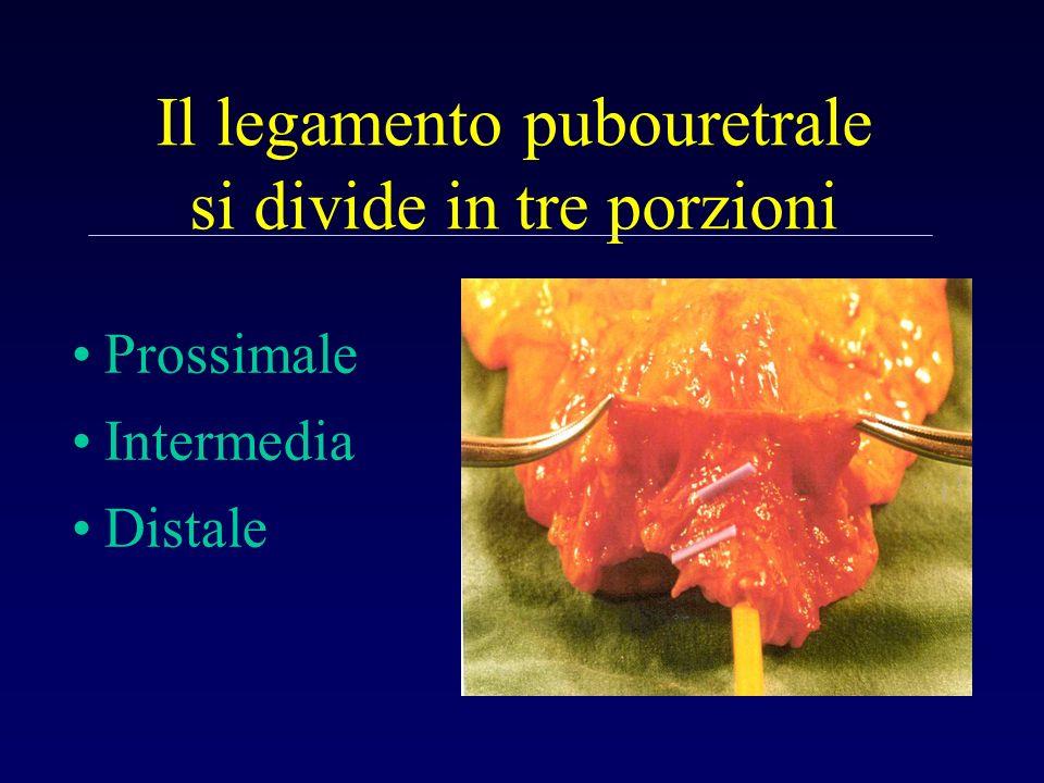 Il legamento pubouretrale si divide in tre porzioni Prossimale Intermedia Distale