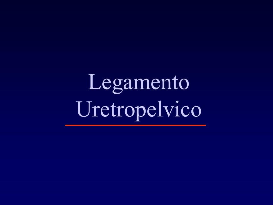Legamento Uretropelvico