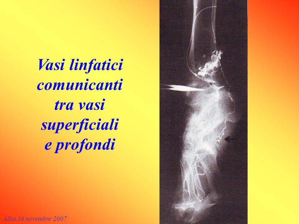 Vasi linfatici comunicanti tra vasi superficiali e profondi Alba,16 novembre 2007