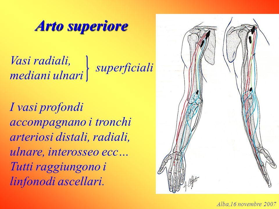 Arto superiore Vasi radiali, mediani ulnari superficiali I vasi profondi accompagnano i tronchi arteriosi distali, radiali, ulnare, interosseo ecc… Tu