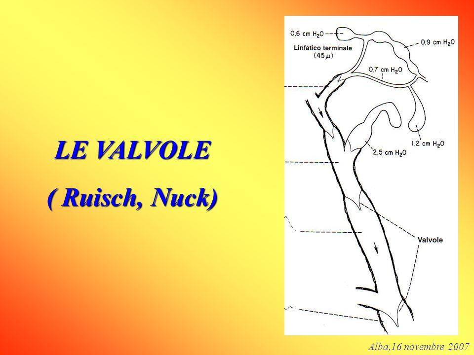 LE VALVOLE ( Ruisch, Nuck) Alba,16 novembre 2007