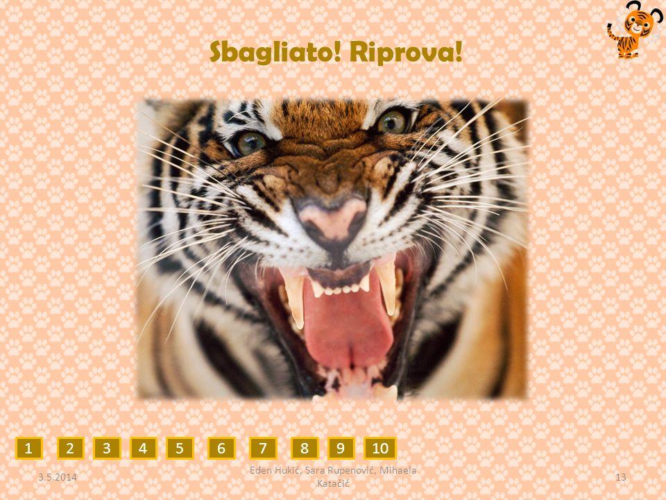 Sbagliato! Riprova! 12345678910 3.5.2014 13 Eden Hukić, Sara Rupenović, Mihaela Katačić