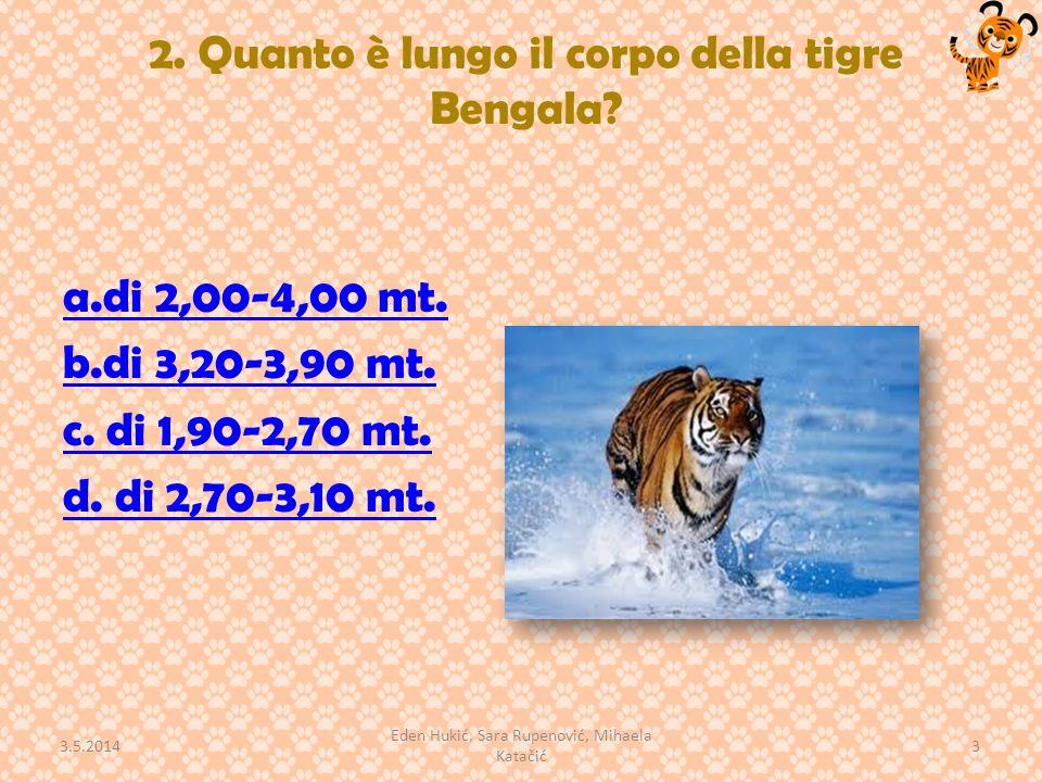 2. Quanto è lungo il corpo della tigre Bengala? a.di 2,00-4,00 mt. b.di 3,20-3,90 mt. c. di 1,90-2,70 mt. d. di 2,70-3,10 mt. 3.5.2014 3 Eden Hukić, S