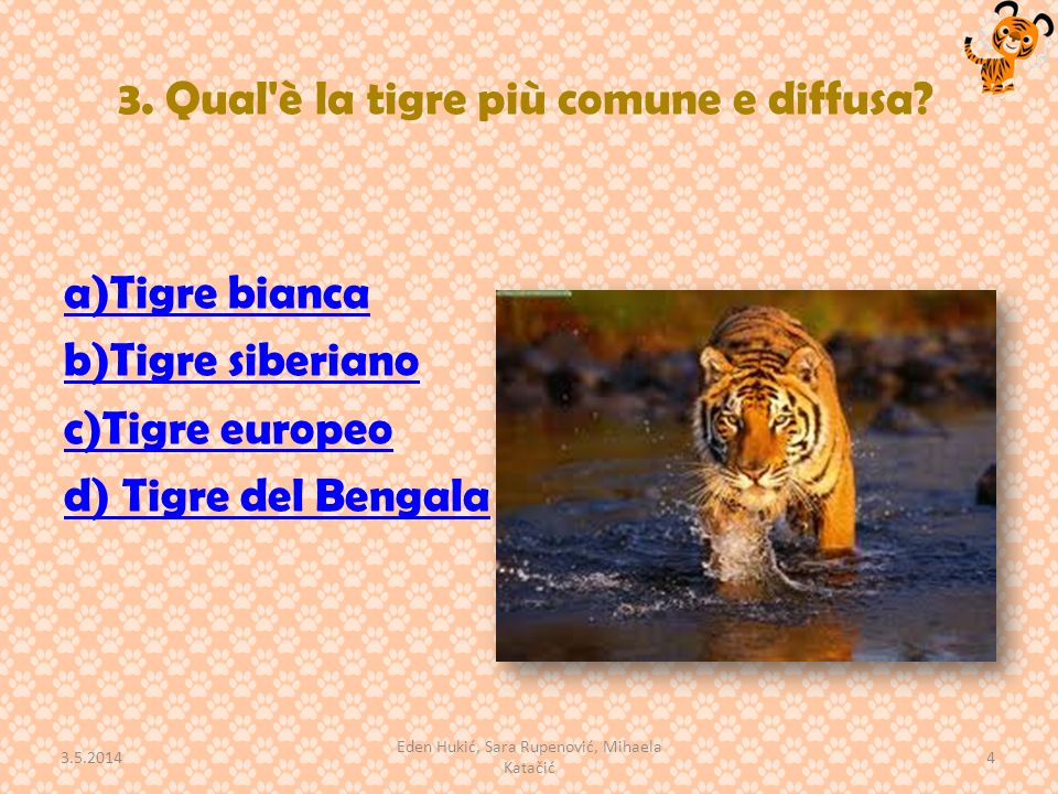 3. Qual'è la tigre più comune e diffusa? a)Tigre bianca b)Tigre siberiano c)Tigre europeo d) Tigre del Bengala 3.5.2014 4 Eden Hukić, Sara Rupenović,