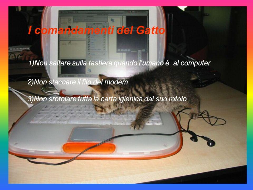 I comandamenti del Gatto 1)Non saltare sulla tastiera quando lumano è al computer 2)Non staccare il filo del modem 3)Non srotolare tutta la carta igienica dal suo rotolo