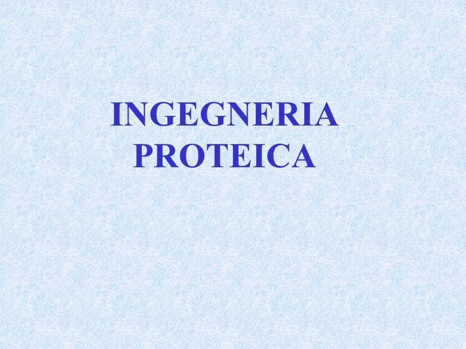 Lingegneria proteica è stata usata per due scopi: 1)La dissezione della struttura e dellattività di una proteina esistente, attraverso alterazioni sistematiche e lesame dei cambiamenti delle proprietà.