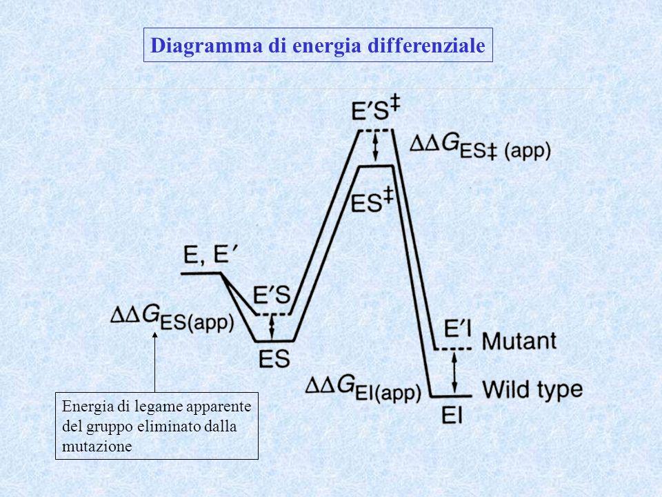Diagramma di energia differenziale Energia di legame apparente del gruppo eliminato dalla mutazione