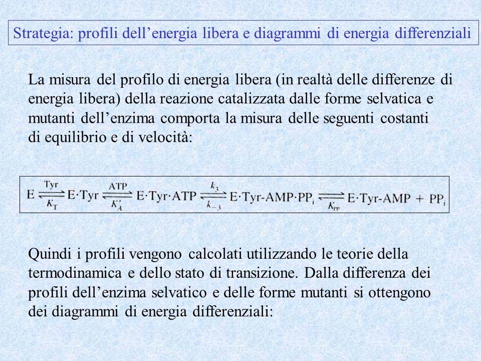 Strategia: profili dellenergia libera e diagrammi di energia differenziali La misura del profilo di energia libera (in realtà delle differenze di ener
