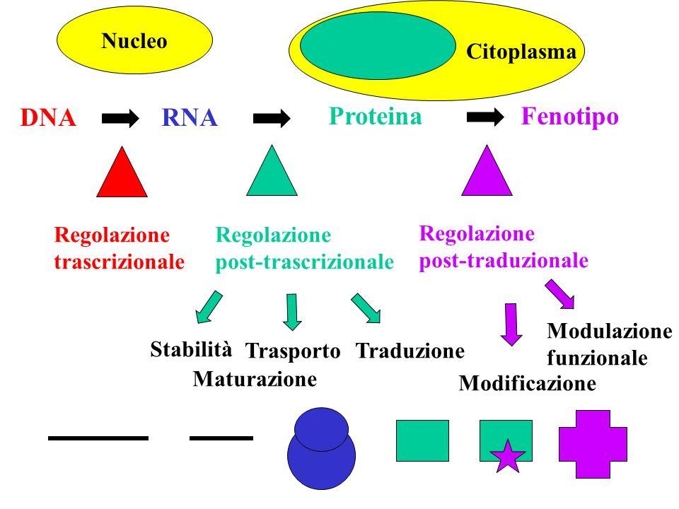 Affinity purification mRNA T7 promoter - poliT poliA Reverse transcription Transcription T7 promoter Random primer Labeling SIGNAL AMPLIFICATION DENDRIMERS cDNA