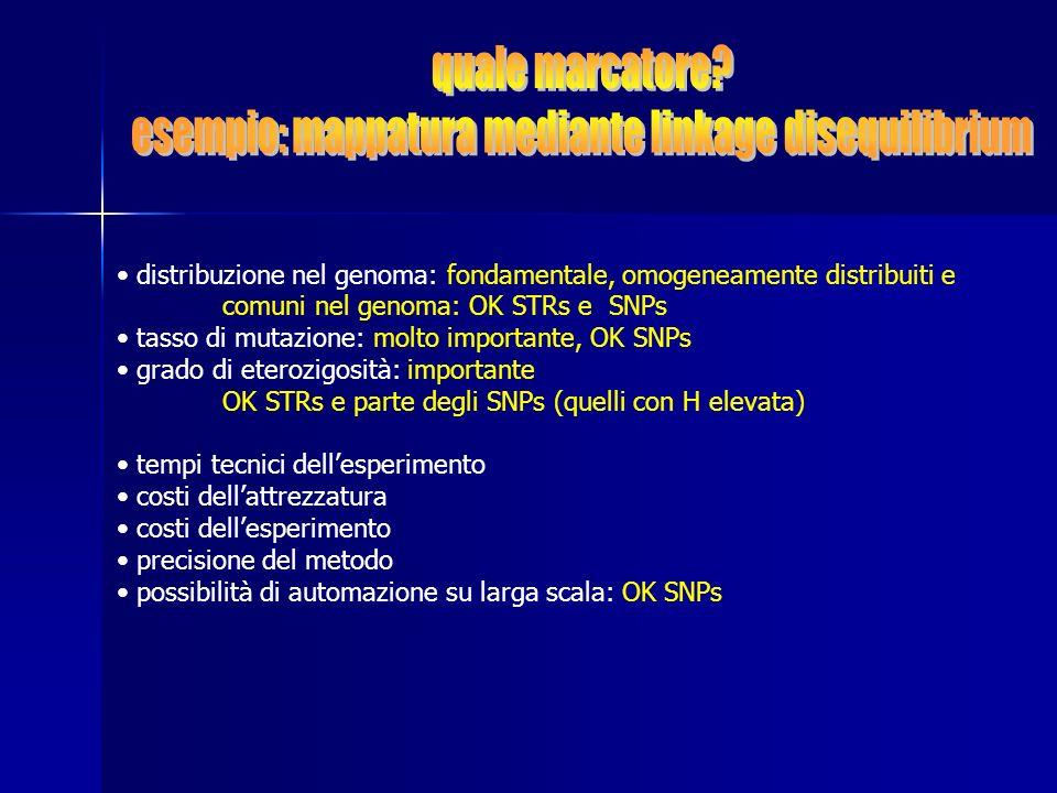 distribuzione nel genoma: fondamentale, omogeneamente distribuiti e comuni nel genoma: OK STRs e SNPs tasso di mutazione: molto importante, OK SNPs gr