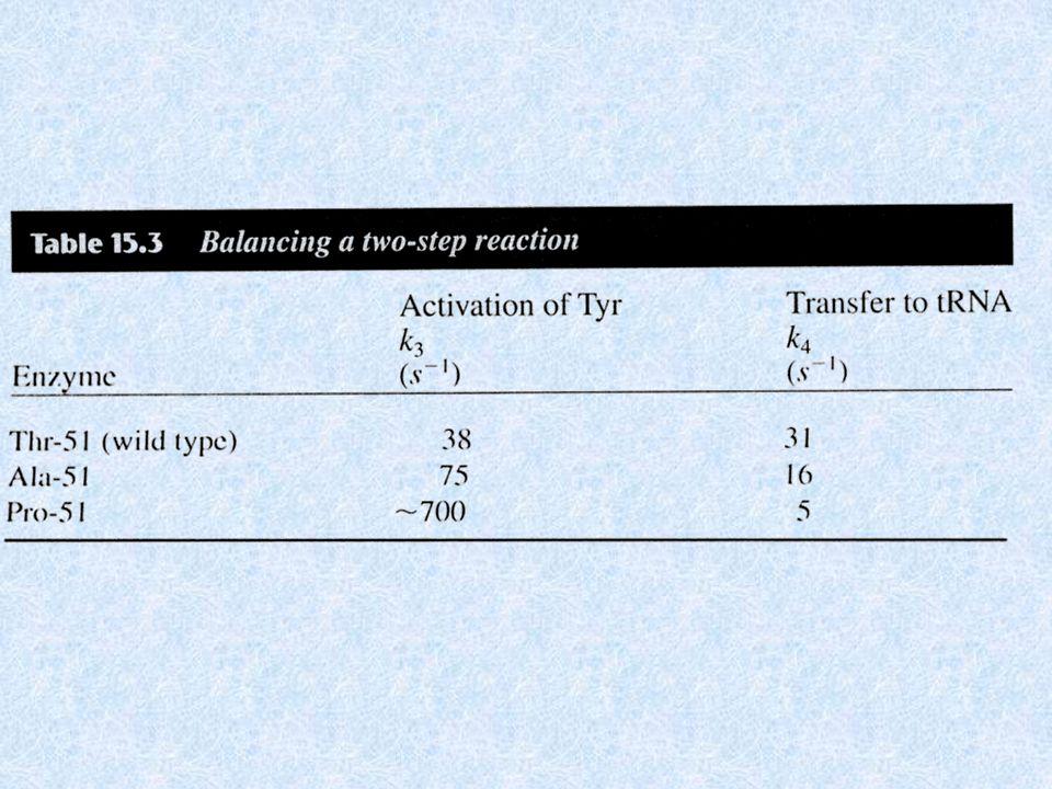 STUDIO DELLA STRUTTURA E DELLA SIMMETRIA DI UN ENZIMA TRAMITE MUTAGENESI La tirosil-tRNA sintetasi ha delle interessanti proprietà connesse alla sua simmetria: Sebbene lomodimero sia simmetrico nel cristallo, esso in soluzione lega solo una mole di tirosina e forma una sola mole di tirosil adenilato.