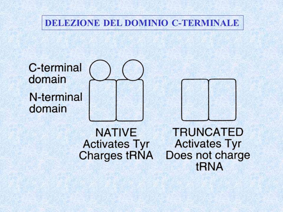 DELEZIONE DEL DOMINIO C-TERMINALE