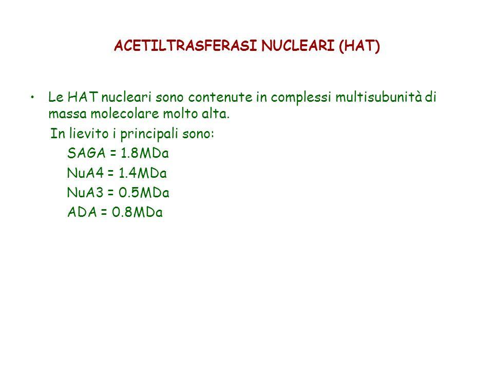 ACETILTRASFERASI NUCLEARI (HAT) Le HAT nucleari sono contenute in complessi multisubunità di massa molecolare molto alta. In lievito i principali sono