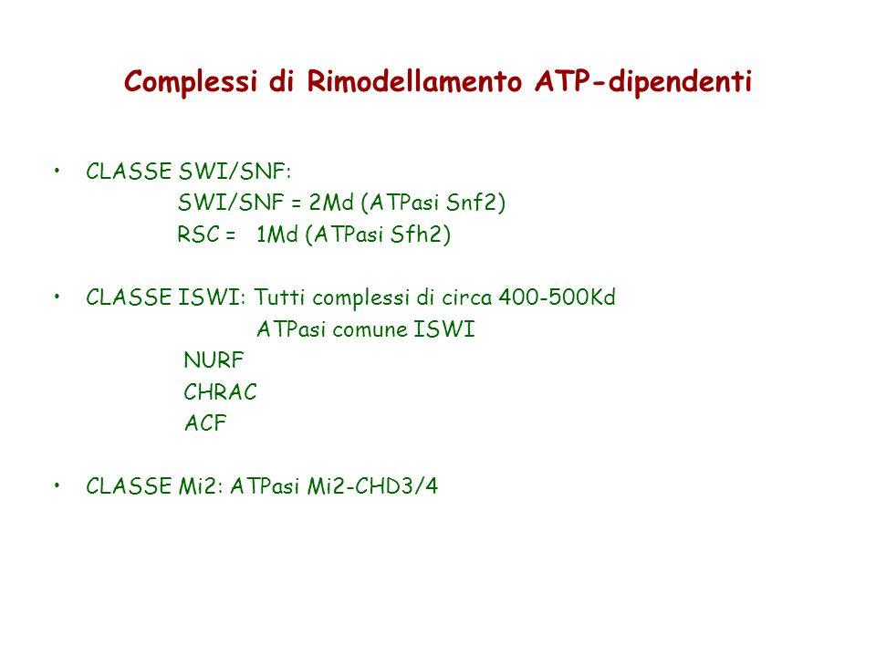 Complessi di Rimodellamento ATP-dipendenti CLASSE SWI/SNF: SWI/SNF = 2Md (ATPasi Snf2) RSC = 1Md (ATPasi Sfh2) CLASSE ISWI: Tutti complessi di circa 4