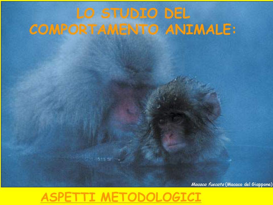 Macaca fuscata (Macaco del Giappone) LO STUDIO DEL COMPORTAMENTO ANIMALE: ASPETTI METODOLOGICI