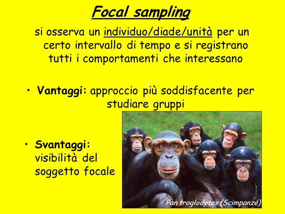 Focal sampling si osserva un individuo/diade/unità per un certo intervallo di tempo e si registrano tutti i comportamenti che interessano Vantaggi: ap