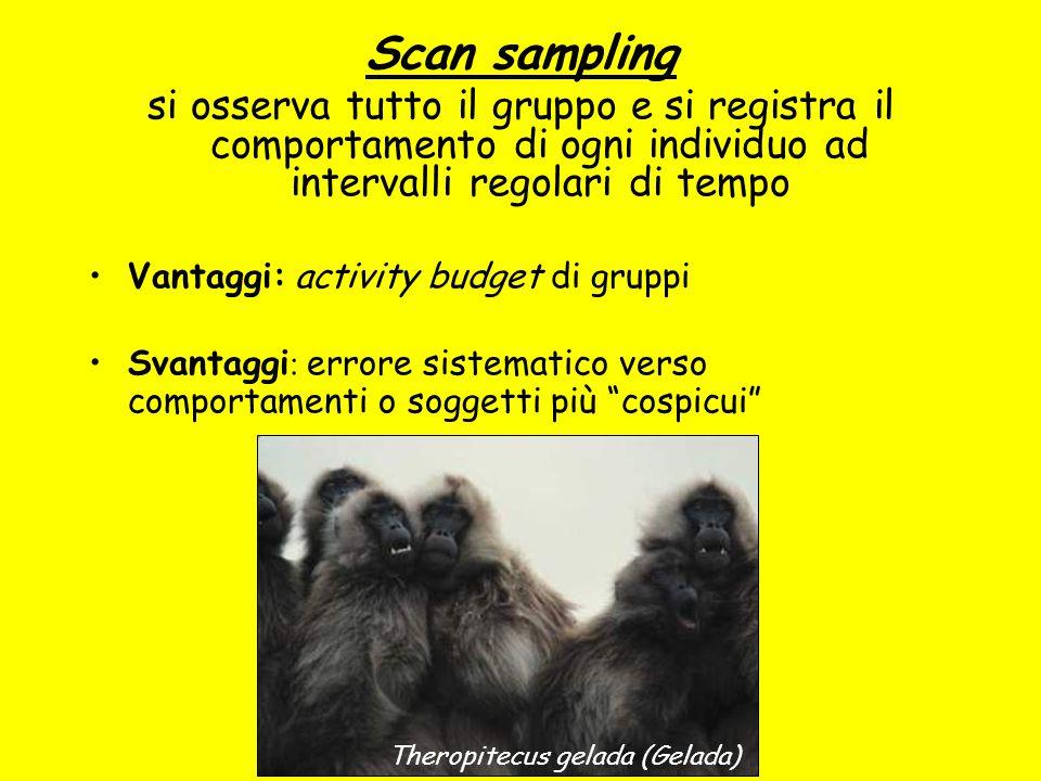 Scan sampling si osserva tutto il gruppo e si registra il comportamento di ogni individuo ad intervalli regolari di tempo Vantaggi: activity budget di