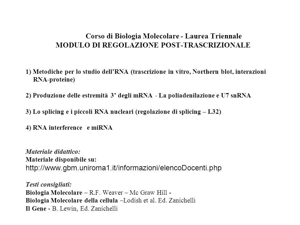 Corso di Biologia Molecolare - Laurea Triennale MODULO DI REGOLAZIONE POST-TRASCRIZIONALE 1) Metodiche per lo studio dellRNA (trascrizione in vitro, N