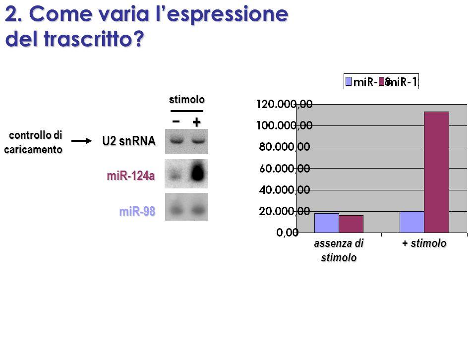 2. Come varia lespressione del trascritto? miR-124a miR-98 U2 snRNA controllo di caricamento + stimolo assenza di stimolo + stimolo