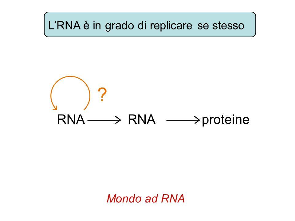 LRNA è in grado di replicare se stesso RNA RNA proteine ? Mondo ad RNA